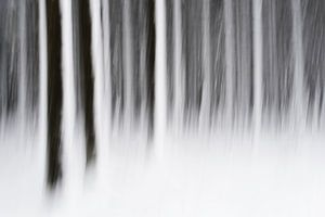 Bos in de sneeuw van