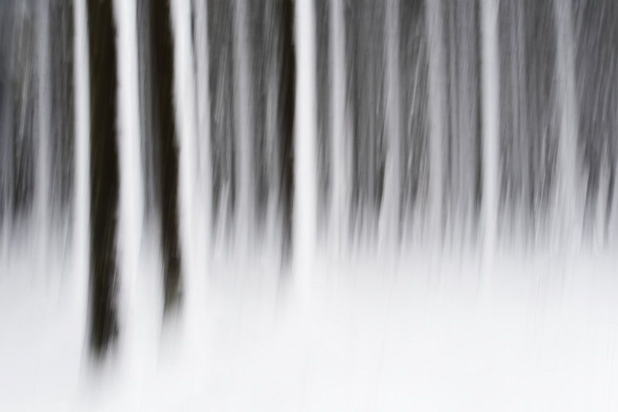 Bos in de sneeuw van Gonnie van de Schans