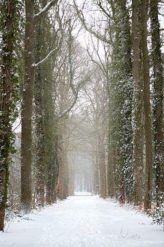 Waldweg in einer Winterlandschaft mit Schnee bedeckt | Fine Art Photo Print von Karijn Seldam