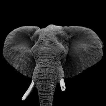 Porträt Elefant in Schwarzweiß von Beeldpracht by Maaike