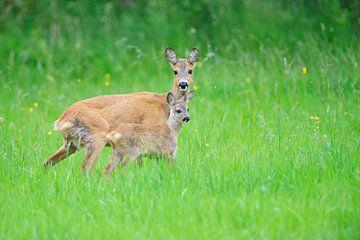 Deer van Karin Jähne