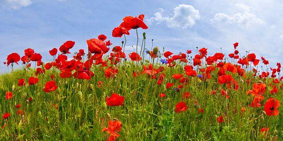 Field Of Red Poppies van Melanie Viola