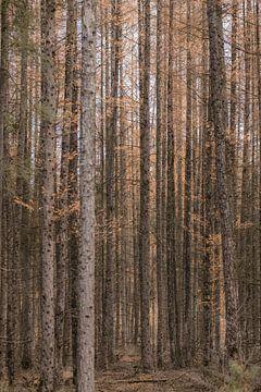 Door de bomen naar het bos kijken (deel 3)