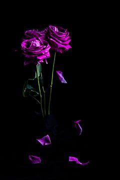 Strauß purpurroter Rosen mit fallenden Blättern