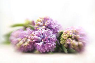 Paarse hyacinten sur Alexandra Bijl