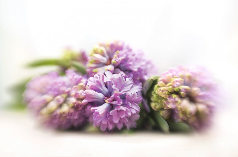Paarse hyacinten van Alexandra Bijl