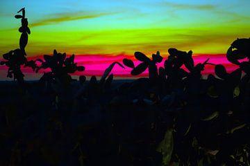 Mallorca - Cactussen bij zonsondergang van t.ART