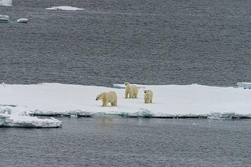 IJsbeer van Merijn Loch