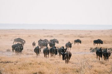 Gnous dans le parc national d'Etosha (Namibie), photographie de la vie sauvage, tirage d'art. sur Suzanne Spijkers