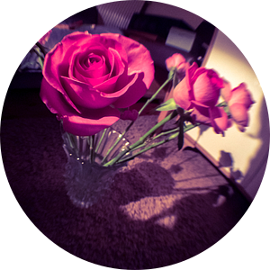 FishEyed rozen van Elisabeth De Potter