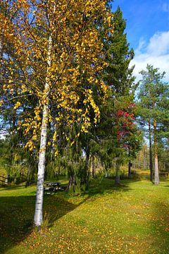Herfst in Zweden van Thomas Zacharias