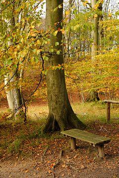 Een plaats in het herfstbos van Ostsee Bilder