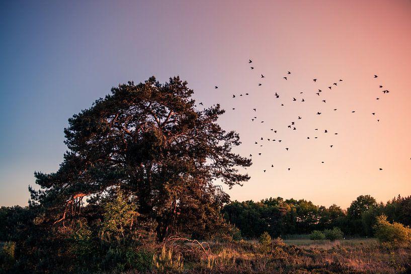 Zonsondergang van Ratna Bosch