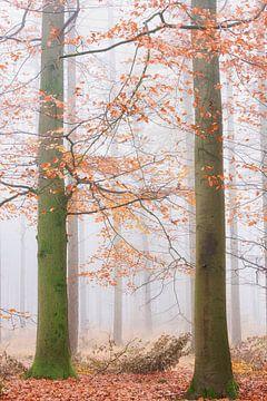 Herbst im nebligen Wald von Francis Dost