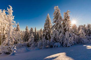 Verse sneeuw in het Zwarte Woud van Werner Dieterich