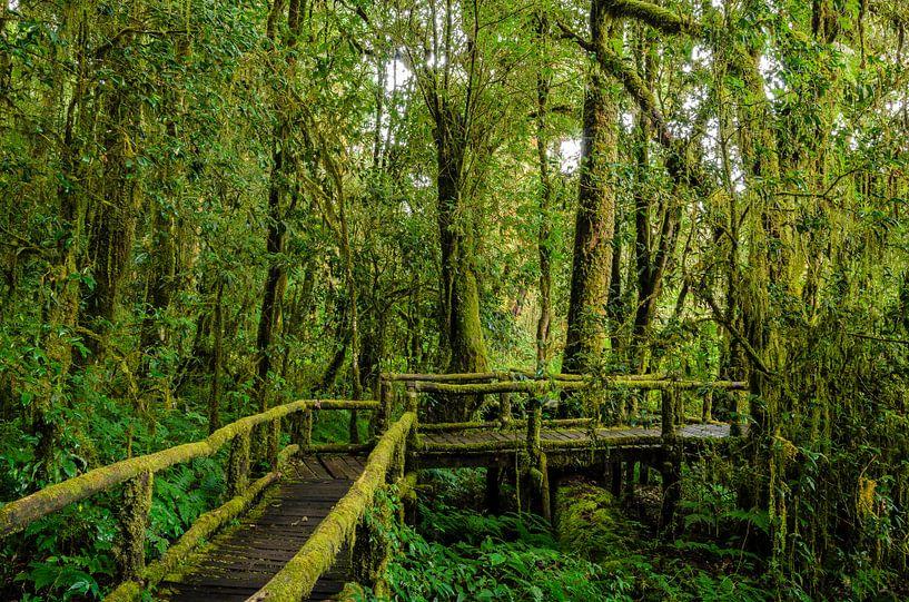 Pathway into the rainforest van Richard Guijt