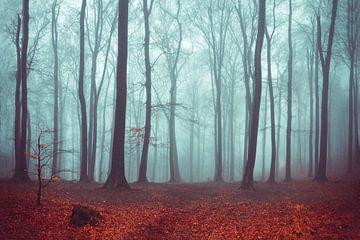 Forest Magic van