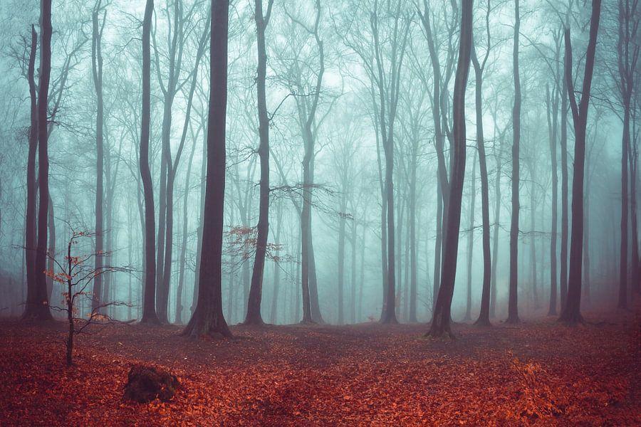 Forest Magic van Dirk Wüstenhagen