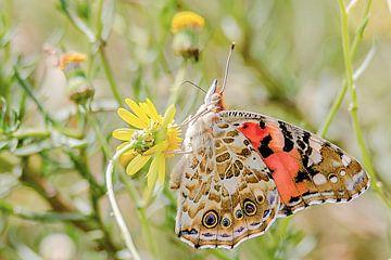Prachtige distelvlinder van Fotografie Jeronimo