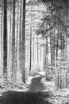 Paadje door het bos. van