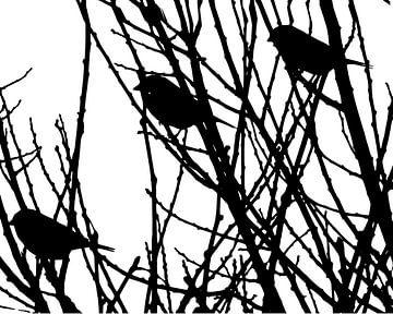 Scherenschnitt-Vögel von JOJO