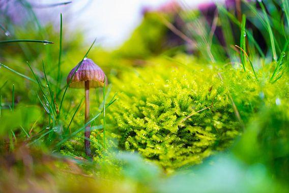 paddenstoel van John Wieringa