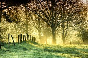 Schinvelds Bos van
