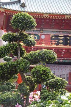 Bonsai met op de achtergrond Senso-ji van