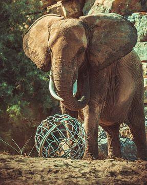 Elefant von Dieter Emmerechts