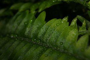 Frisches Grün von Joran Quinten