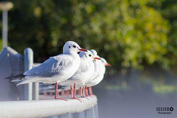 Vögel von Gabriella Sidiropoulos