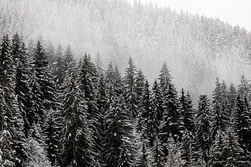 Verschneite Bäume im Nebel von Guido Pijper