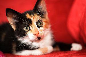 Kitten innocence close-up