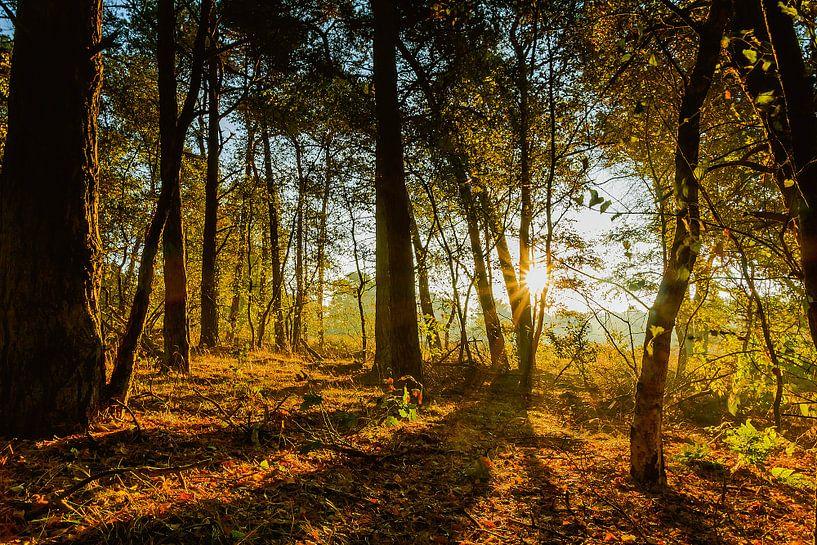 Zonsopgang in het bos van Koop je Canvas