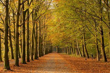 Sfeervol bospad in de herfst van Peter van Dam