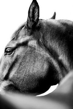 Gros plan sur une photo d'art d'un cheval sur Daliyah BenHaim