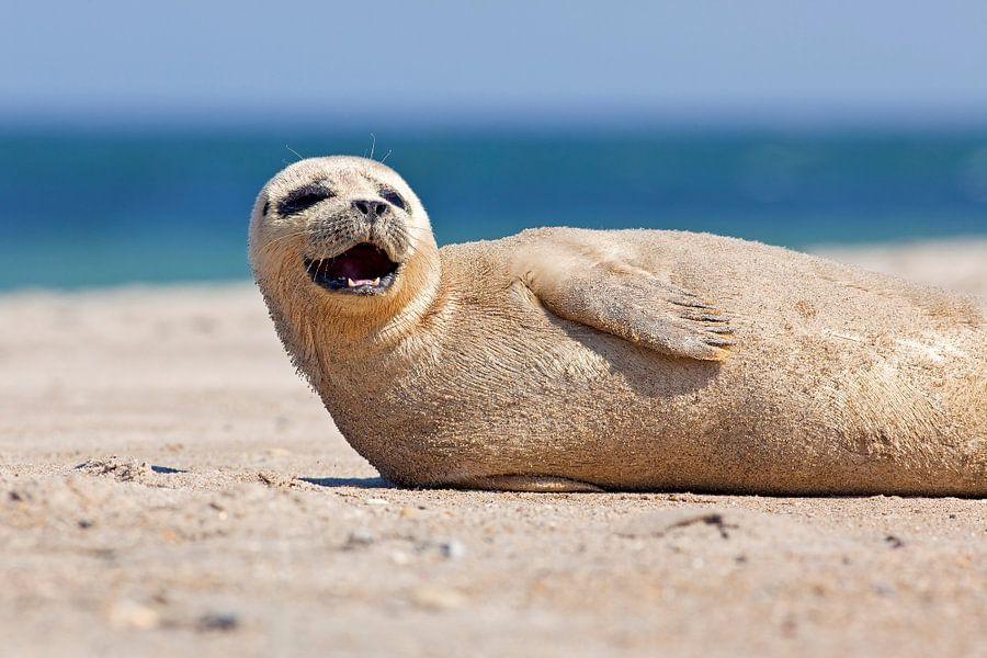 Blije zeehond van Anton de Zeeuw