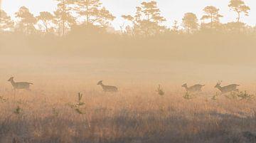 Herten in de ochtendzon van Ans Bastiaanssen