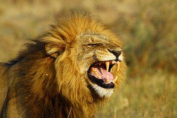 brullende leeuw van Marieke Funke