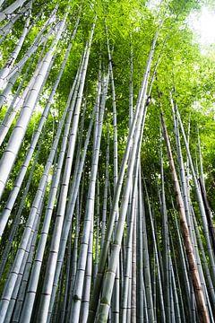 Bamboebomen in  het bamboebos in Kyoto van Ineke Huizing