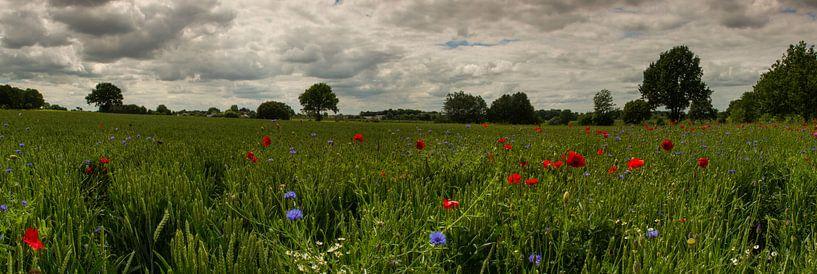 Veldbloemen panorama van Maurice Hertog