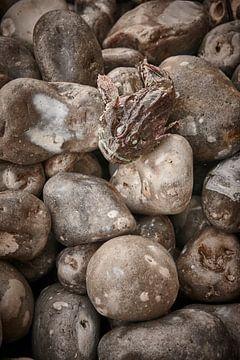 Coast Normandie fish stones van Paul Delaet