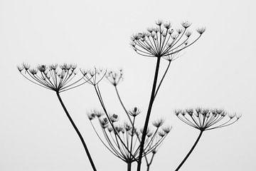 Schwarz-Weiß-Winterpflanze von Tania Perneel
