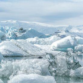 Zeehond zwemmend tussen ijsbergen en ijschotsen in IJsland van Leon Brouwer