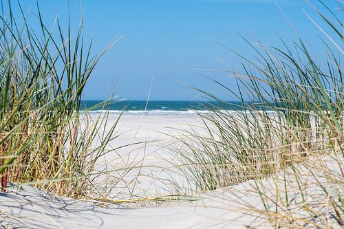 Strandverlangen van Freek Rooze