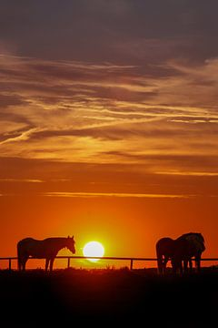 Pony's met zonsondergang van Caroline van der Vecht