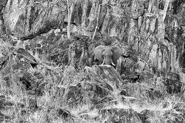 Felsen-Elefant von Angelika Stern