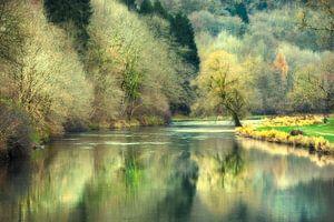 Weerspiegeling bos in herfsttinten in water (België)