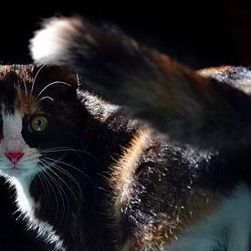 Kitten van Aafke's fotografie