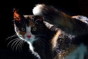 Kitten van